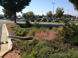 Sustainable Landscape Design: Water Efficiency and Quality