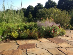 Sustainable Landscape Design in North Carolina